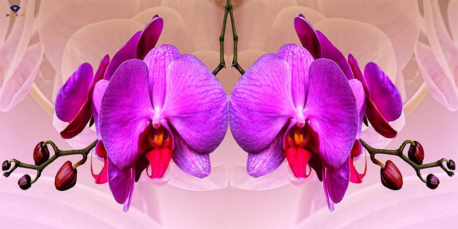 Tranh hoa Lan khổ 60x120cm